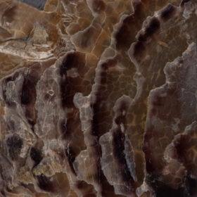 SOLID RAW SHELLStagnipis solid raw shells 280x280 1 Madreperla