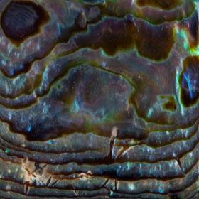 SOLID POLISHED SHELLSpaua blue solid polished shells 280x280 1 Madreperla