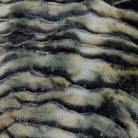 SOLID RAW SHELLSblack lip solid raw shells 280x280 1 Madreperla
