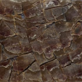 CRACKING RAW SHELLtagnipis cracked raw shells 280x280 1 Madreperla